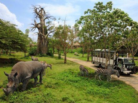 Bali Safari and Marine Park - BaliWisataTravel.com