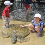 pulau penyu - Tanjung Benoa - BaliWisataTravel.com