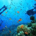 Diving at Nusa Dua
