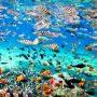 snorkeling nusa penida14